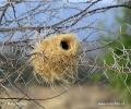 Mahaliwebe - Nest