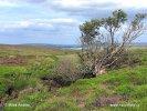 Nationalpark North York Moors