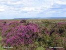 Nationalpark North York Moors