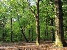 Nationalpark Utrechtse Heuvelrug