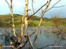 Nationalpark Zuid-Kenemerland