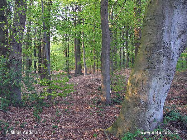 Nationalpark Drents-Friese Wold (NL)
