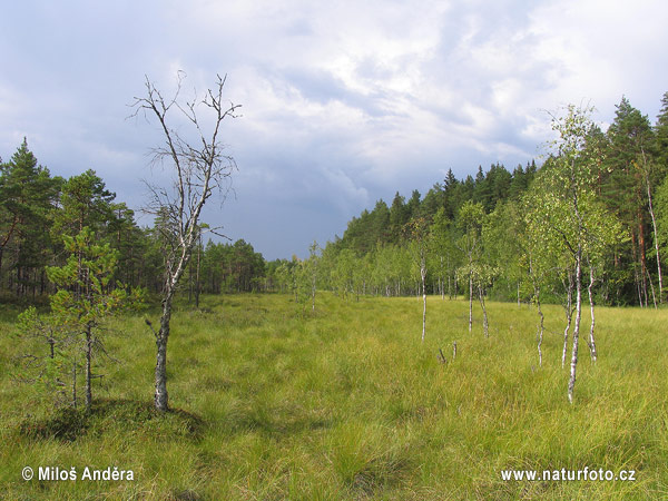 Nationalpark Kurjenrahka (F)