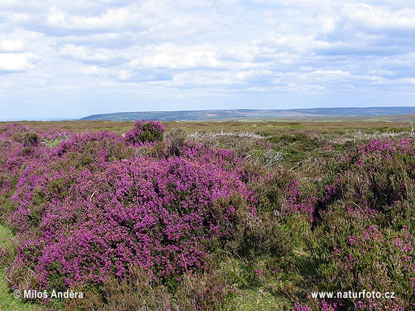 Nationalpark North York Moors (UK)