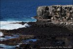 Galapagos - Espanola