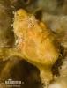 Gemalter Anglerfisch