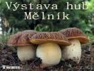 Pilze Ausstellung - Melnik (CZ) 2013