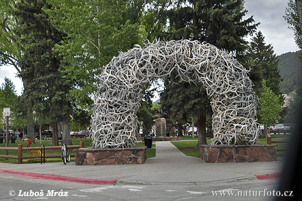 Elk Antler Arches, Jackson, USA (Wyoming, USA)