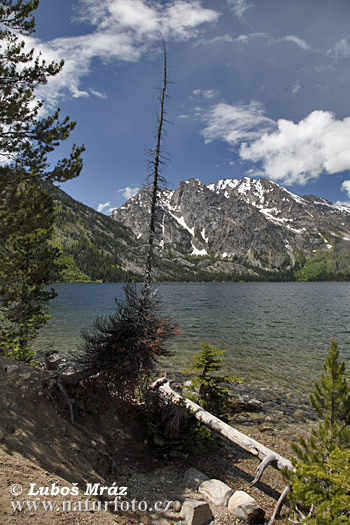Grand Teton (Wyoming, USA)