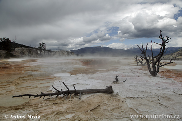 Yellowstone, Mammoth (Wyoming, USA)