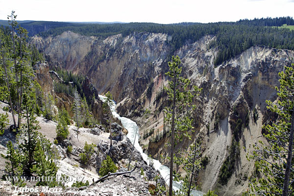Yellowstone (Wyoming, USA)