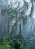 Der gebirgige regene Wald