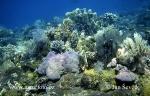 Koralle Felsen
