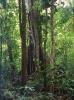 Regen Wald, Darien