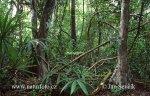 Regen Wald, Peten