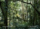 Regen-Wald