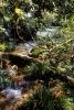 Regenwald Misol-Ha
