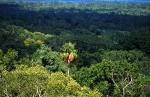 Regenwald Petén