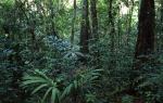 Regenwald Petén Tikal