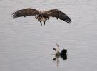 See Adler