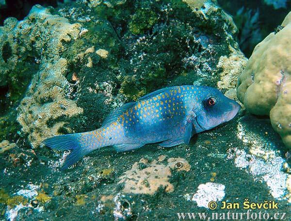 Fisch bilder fisch fotos naturfoto for Fisch bilder