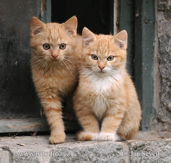 Chat Strays Cats