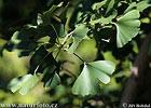 Andere Pflanzen