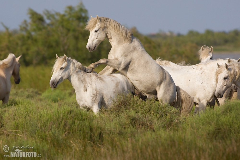 wallpaper of wild horses