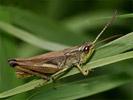 Insekten fotos bilder