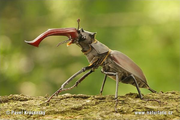 الحشرات الجزء ال2